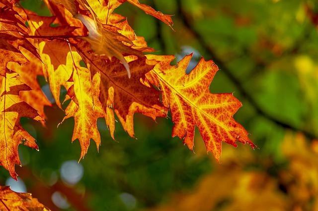 podzimní listí na stromě