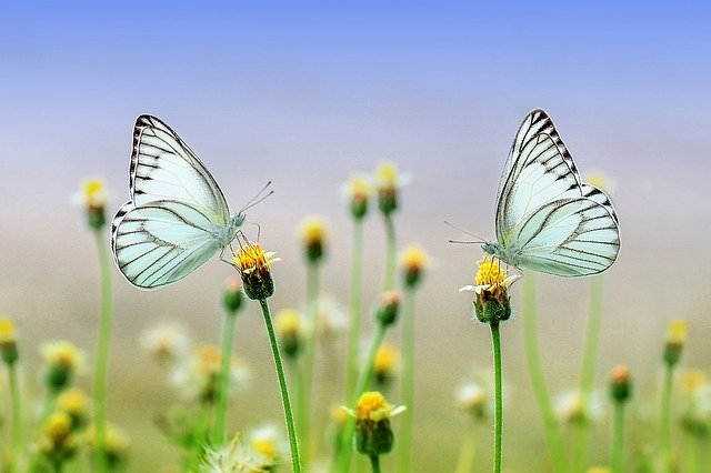 motýli na květinách