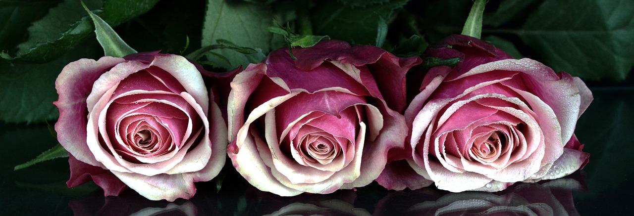 roses-1706448_1280